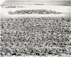 远山前奔跑的马群